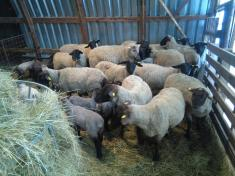 Návštěva farmy
